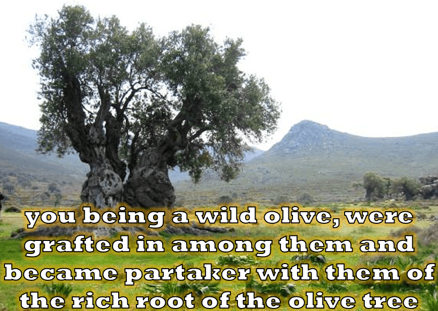 God's Olive Tree (part one)